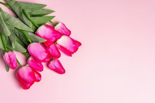 Strauß leuchtend rosa tulpen auf mattrosa hintergrund