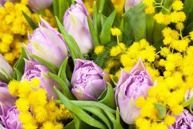 Strauß lila tulpen und gelbe mimosen, makro, seitenansicht, nahaufnahme