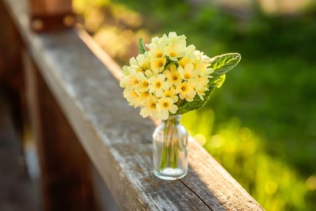 Strauß primel primula mit gelben blüten in glasvase unter weichem sonnenlicht und unscharfem hintergrund.