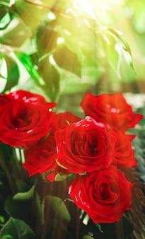 Strauß roter rosen als florales urlaubsgeschenk schöne frische gartenblumen als wohnkultur