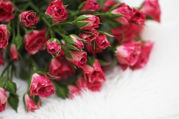 Strauß roter rosen auf weißem hintergrund