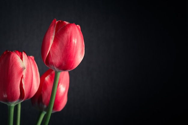 Strauß roter tulpen