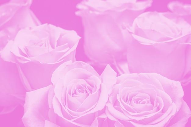 Strauß schöner roter rosen auf schwarzem hintergrund