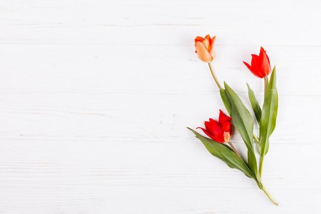 Strauß tulpe blumen