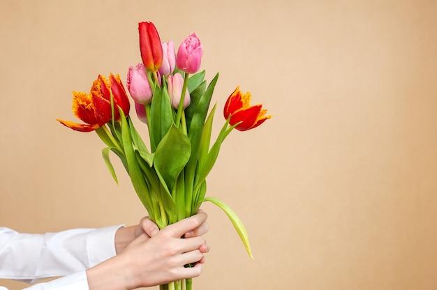 Strauß tulpen in händen auf einem neutralen