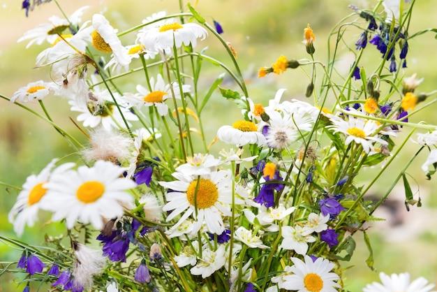Strauß weißer blumen, gänseblümchen und andere feldpflanzen