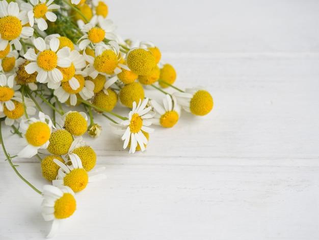 Strauß wilder gänseblümchen auf weißem holzhintergrund mit kopierraum