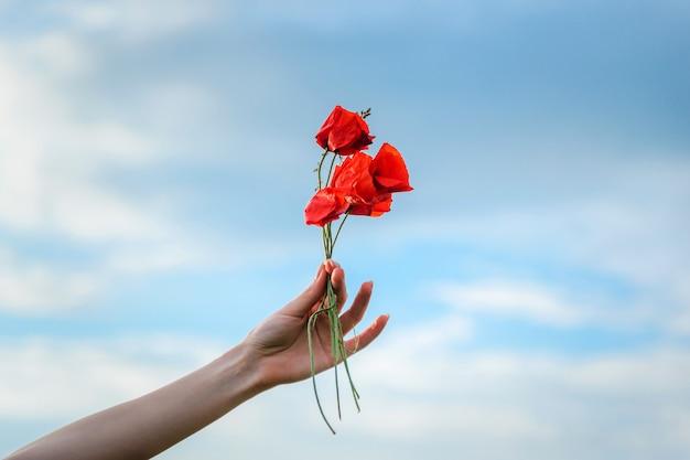Strauß wilder roter mohnblumen in weiblicher hand vor blauem, klarem himmel, urlaubskonzept, glückwünsche