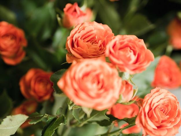 Strauß zarter rosen