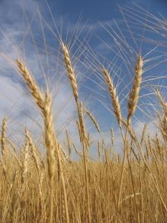 Straws, ländliche