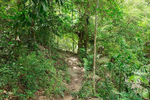 Stream im tropischen dschungel
