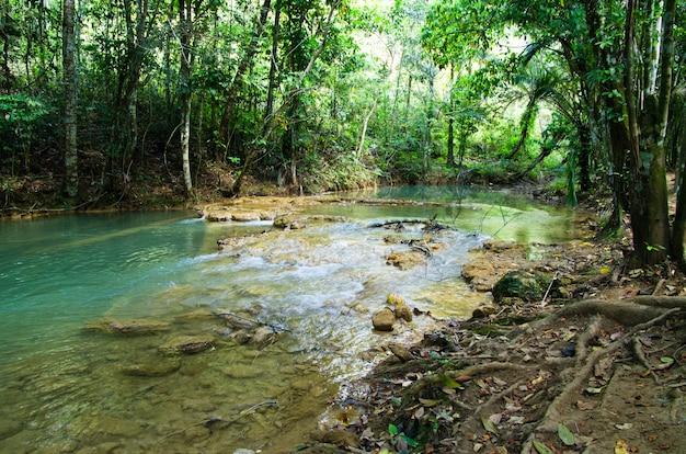 Stream im tropischen wald
