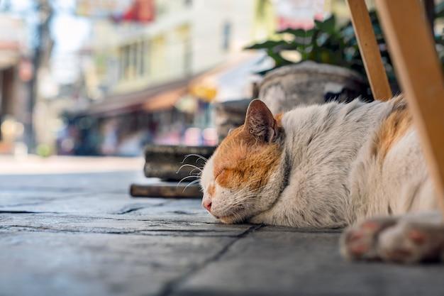 Street dirty cat schläft entspannt und sorglos auf dem bürgersteig