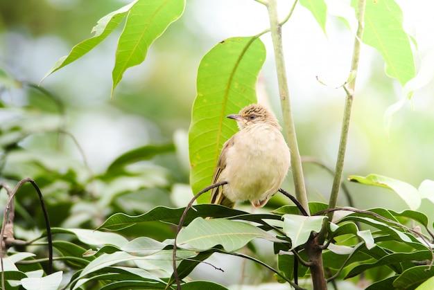 Streifenohrbulbul steht auf ästen im wald. vogel im naturhintergrund.