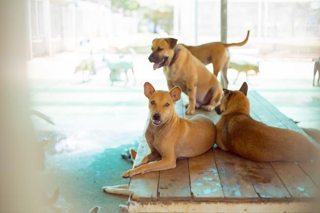 Streunende hunde, allein das leben wartet auf essen. verlassene obdachlose streunende hunde liegt auf der straße. kleiner trauriger verlassener hund auf hölzernem.