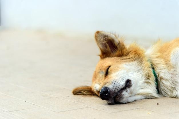 Streunende hunde der nahaufnahme, die auf der straße mit weichzeichnung und über licht im hintergrund schlafen