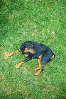 Streunende hunde im park.