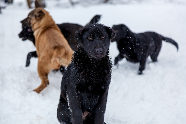 Streunende hunde mit traurigen augen im winter draußen. hungrige welpen leben auf der straße und frieren im winter vor kälte.