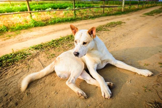 Streunende hunde werden auf straßen liegen gelassen