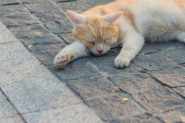 Streunende ingwerkatze, die auf der pflasterung schläft.