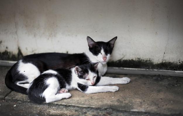 Streunende kätzchenfamilie auf der straße schlafen mit mutter
