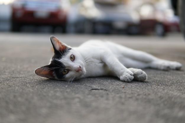 Streunende katze auf der straße