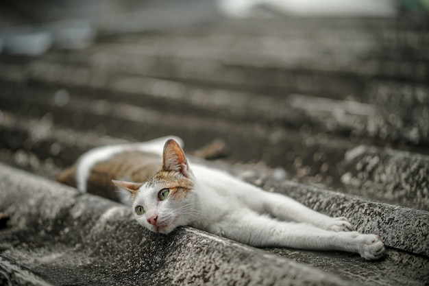 Streunende katze schläft auf dem dach des hauses