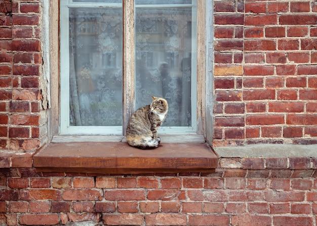 Streunende katze sitzt auf einer fensterbank vor einem alten backsteinhaus katze am fenster