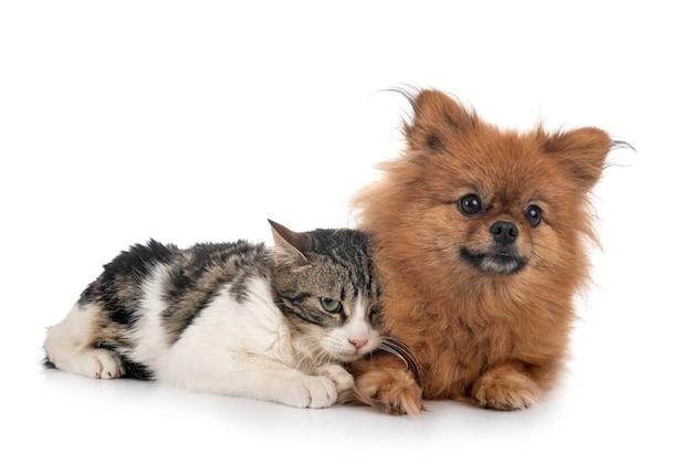 Streunende katze und spitz