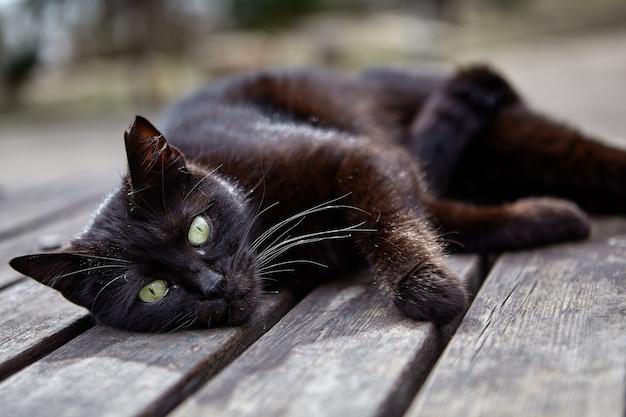 Streunende schwarze katze ruht auf tisch aus holzlatten im stadtpark liegend