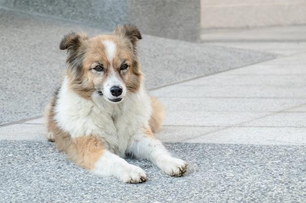 Streunender hund, der auf einem boden in der stadt liegt