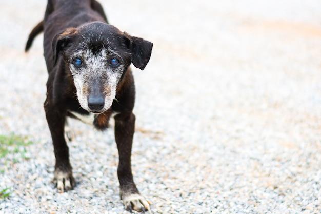 Streunender hund, der neben straße steht