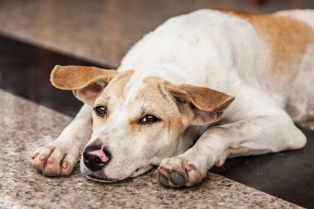 Streunender hund hautnah