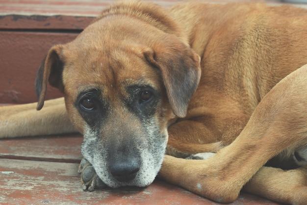 Streunender hund mit sehr traurigen klugen augen. traurig