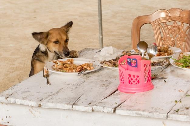 Streunender hund stiehlt futter vom tisch