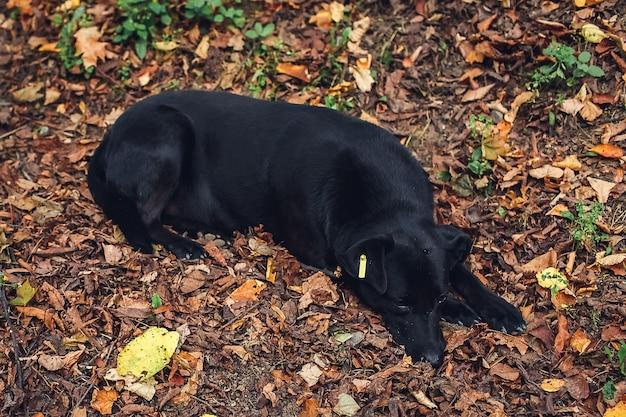 Streunender mischlingshund mit traurigem gesicht draußen im park. sterilisierter hund.