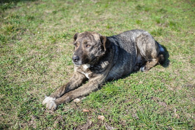 Streunender obdachloser hund