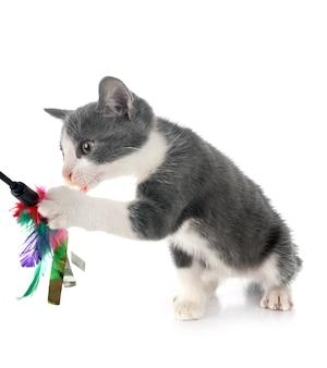 Streunendes kätzchen isoliert