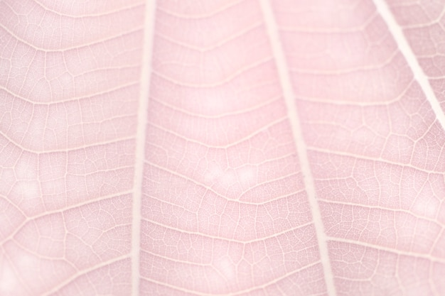 Strichzeichnungen auf blassrosa zwergweißblatt textur makrofotografie