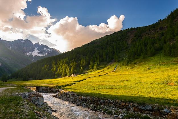 Strömen sie das fließen durch blühende alpenwiese und üppigen grünen waldgebirgszug der großen höhe bei sonnenuntergang