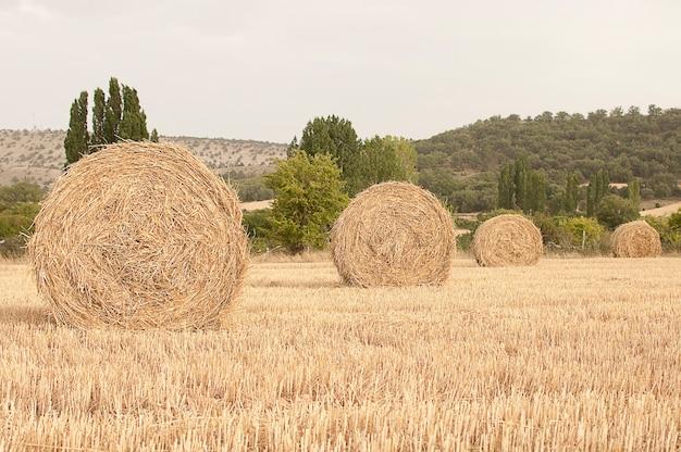 Strohballen auf einem feld in kastilien spanien