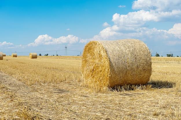 Strohballen weizen. strohballen auf dem schönen feld. heuhaufen liegen auf dem feld. ackerland. bauernkonzept. schönes landschaftsfoto. ballen nach der ernte auf dem feld. sommertag