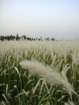 Strohdach- oder grashintergrund.
