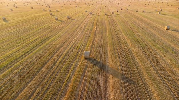 Strohrollen auf einem landwirtschaftlichen feld nach der weizenernte