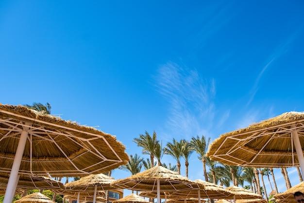 Strohschattenschirme und frische grüne palmen in der tropischen region gegen blauen lebendigen himmel im sommer.