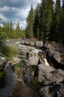 Strom, der wald, maligne-schlucht, jasper national park, alberta, kanada durchfließt