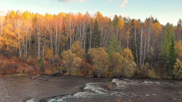 Strom des gebirgsflusses und des fallwaldes. schöne herbstnaturlandschaft bei sonnenuntergang.