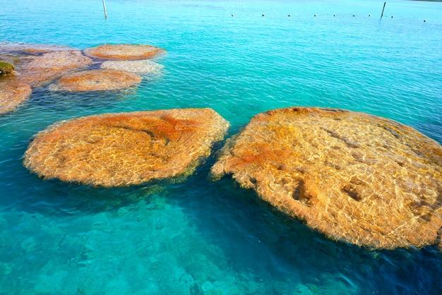 Stromatolithe in der bacalar-lagune von mexiko