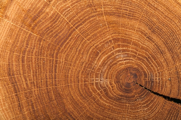 Struktur des log-querschnitts