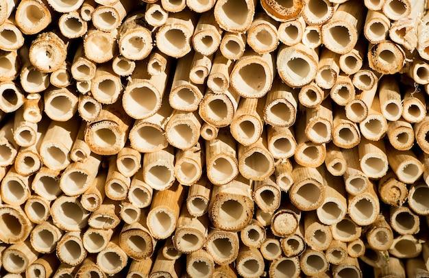 Strukturierter abstrakter natürlicher hintergrund aus holz oder holz geschnittenen bambusstöcken oder rohren mit runden rohren